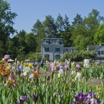 Here's What's Blooming at the Presby Memorial Iris Gardens in May