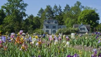 Essex County Presby Memorial Iris Gardens
