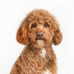 Ron Holtz Photography Fundraiser for Montclair Animal Shelter