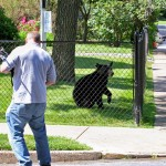 Black Bear Cub Visits Montclair Center, Runs By Stores, Climbs Trees (VIDEO)