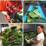 Garden Harvest at Bloomfield's Oak View Elementary Benefits Toni's Kitchen