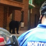 Breaking: Bear on South Park Street in Montclair, Police Guarding Area (Updated)
