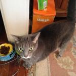 Lost Cat in Bloomfield