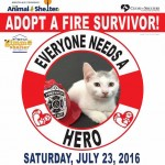 Montclair To Host Clear the Shelters Event, Saturday, July 23