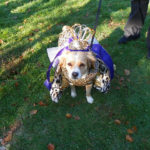 Strut Your Mutt at the Essex County Halloween Costume Contest for Canines (UPDATE)