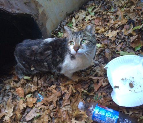 fieldhouse-kitty