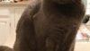 Lost Cat in Glen Ridge, Reward Offered