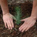 Montclair Arbor Day: Free Tree Giveaway Event and Family Fun, 4/30