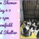 """Bloomfield Animal Shelter to Hold """"Kitten Shower"""""""