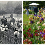 Celebrating 90 Years of May Bloom: Presby Memorial Iris Gardens!