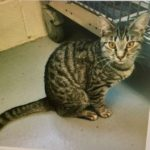 Montclair Animal Shelter Pet of the Week: Melly Belly