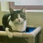 Montclair Animal Shelter Pet of the Week: Silas