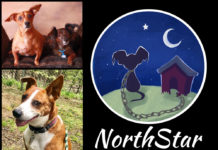 NorthStar Pet Rescue