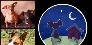 NorthStar Pet Rescue