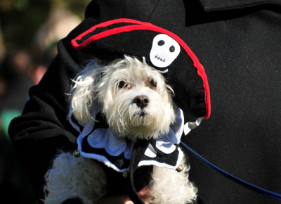 canine halloween costume contest returns to brookdale dog park