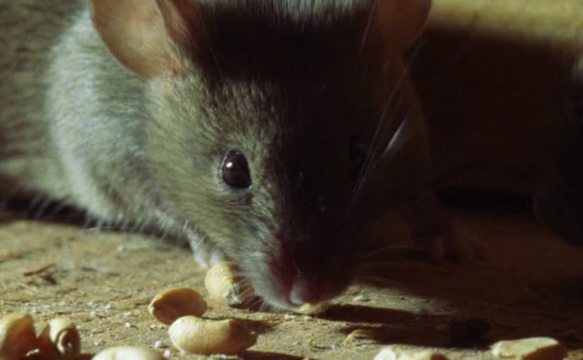 Keeping your home rodent-free is easy with Bark