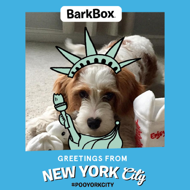 #BarkBoxDay Instagram image collage