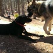 Oak Ridge Dog Park