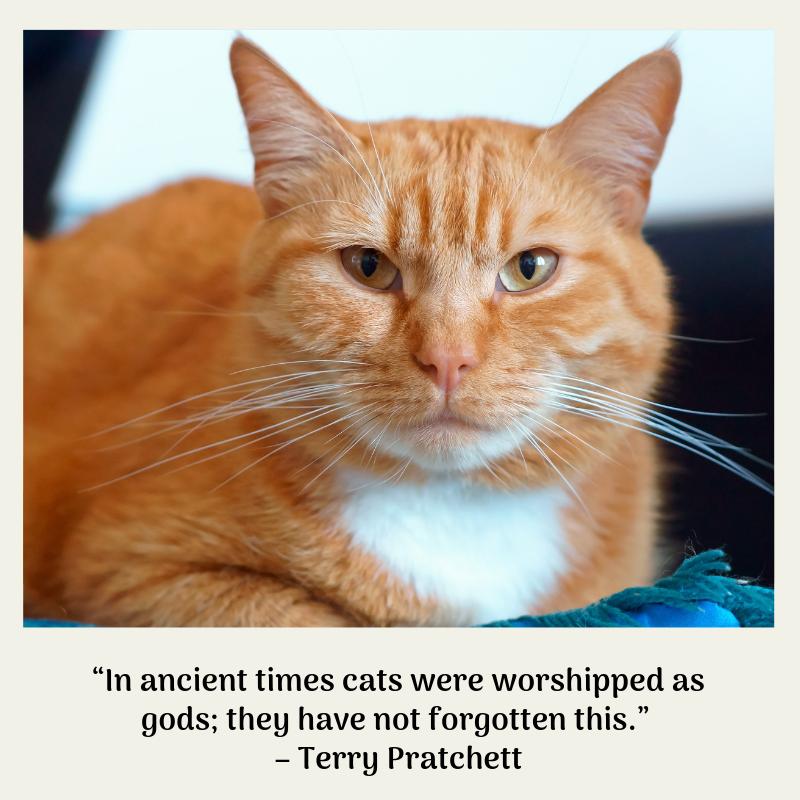 worship-cats