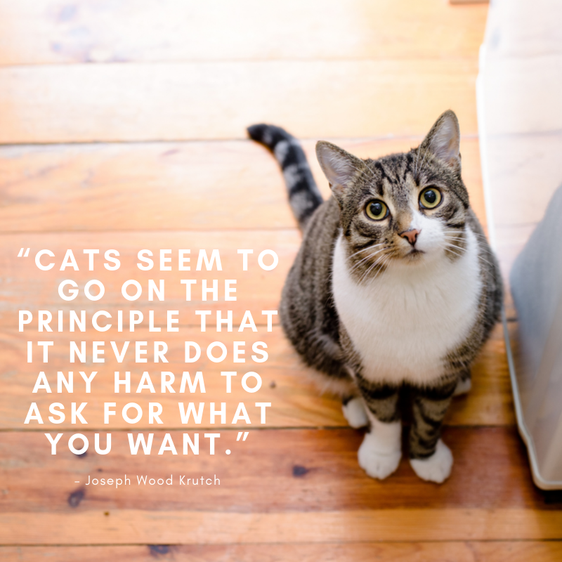 Cat-Quote-AskForWhatYouWant