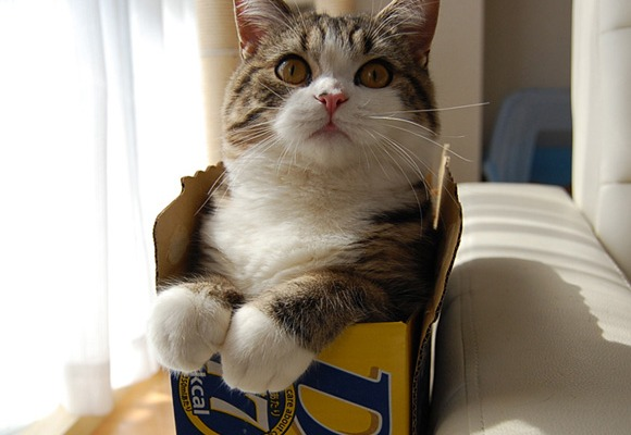 Most popular cats of all time