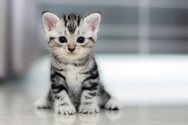 Surprising Facts About Kittens
