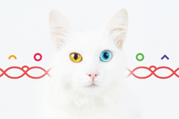 A Time of Feline Genetics Discovery: Interview with Anna Skaya CEO & Founder Basepaws