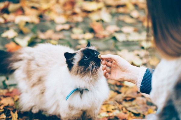 7 Reasons Why You Should Give Thanks To Your Cat This Year