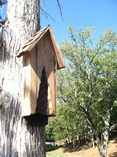 Bat House - The Nostalgic -  Tree