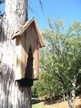 Bat House - The Nostalgic -  Tree