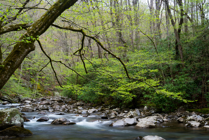 stream-in-the-great-smoky-mountains