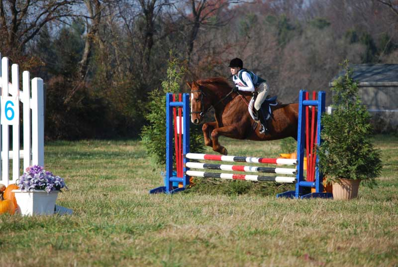 Horseback rider learning to jump barriers