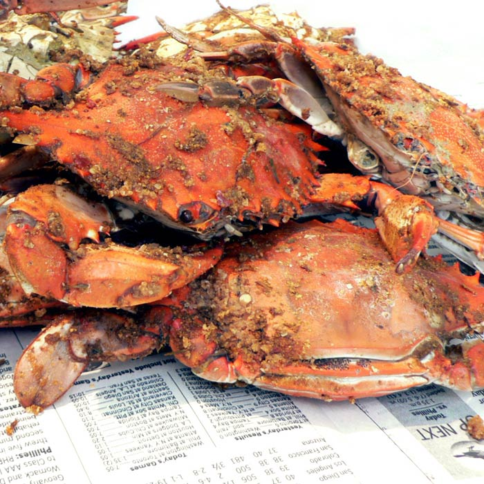 Freshed steamed Maryland crabs
