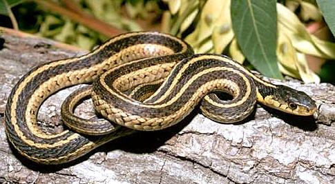 Snake Basics