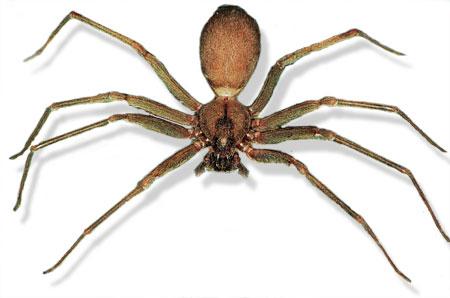 Spider Basics