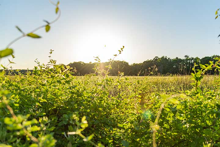 Guest Blog: Nanticoke River Wildlife Management Area is a prime Wicomico birding spot