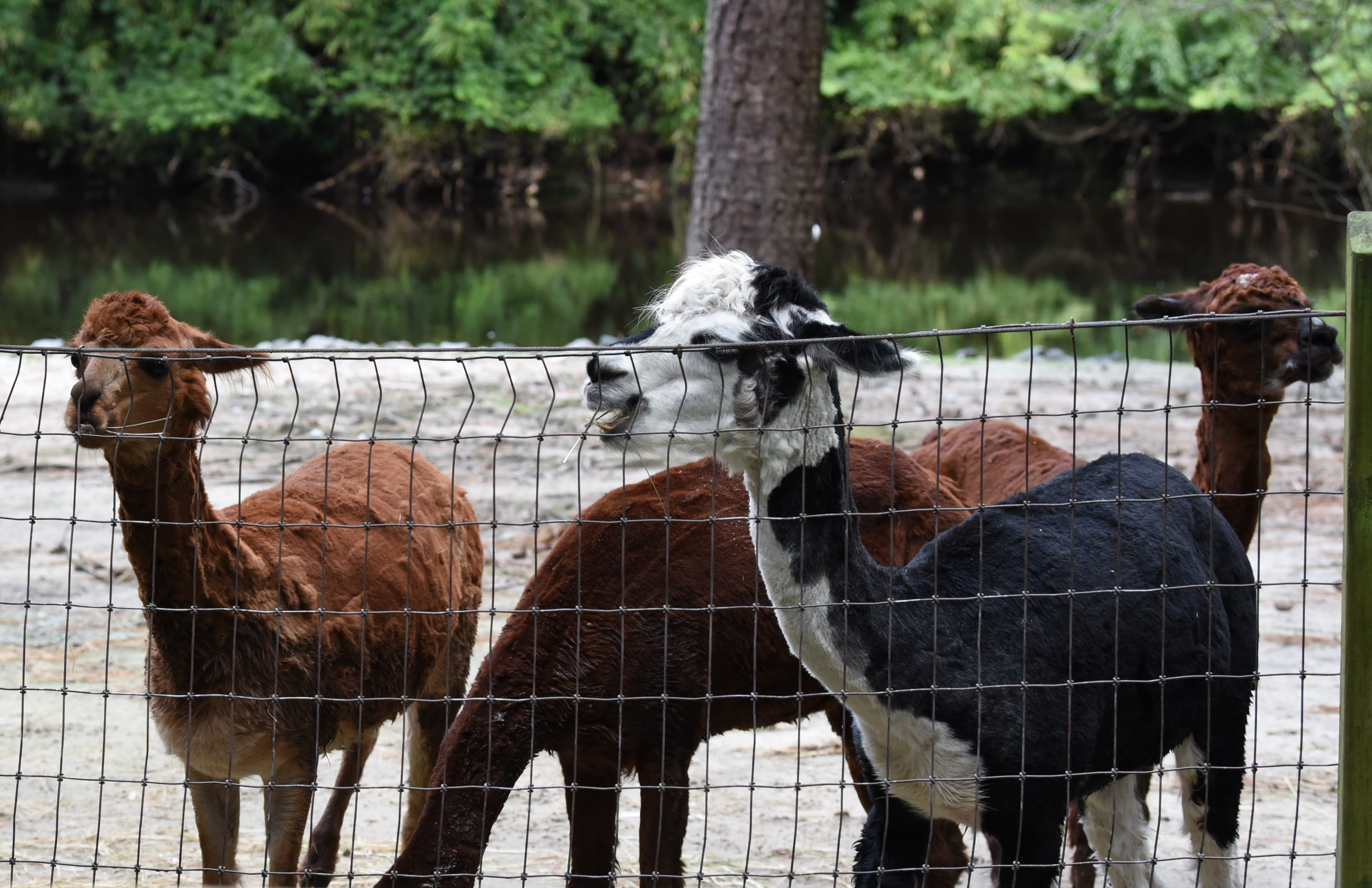 The Salisbury Zoo is back open. Here's what you need to know for your next visit.