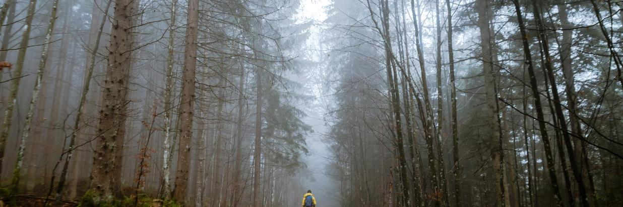 Lone hiker in the woods