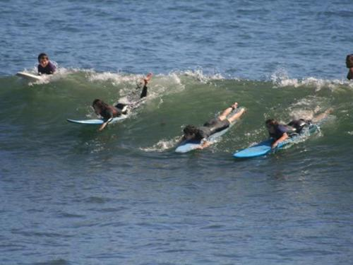 Surfers learning to surf