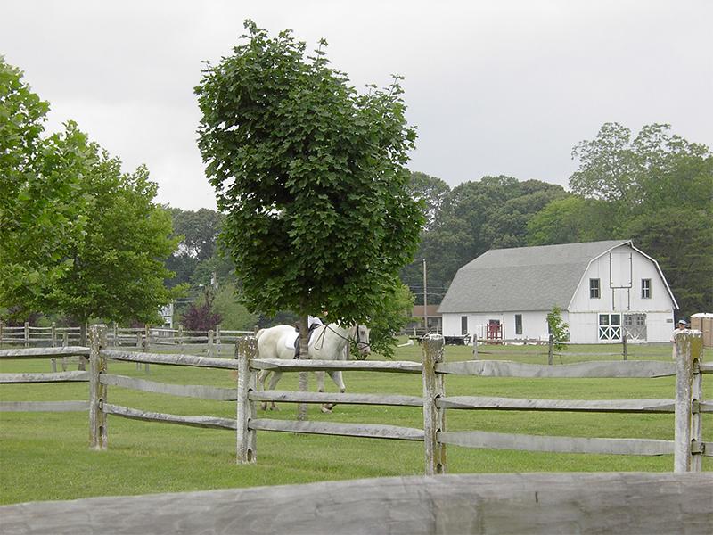 gallery-2232-Wicomico-Equestrian-800x600-2.jpg