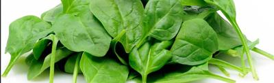 Spinach Header