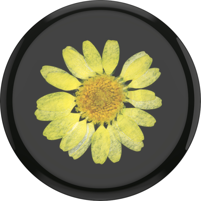 Pressed Flower Yellow Daisy PopSocket