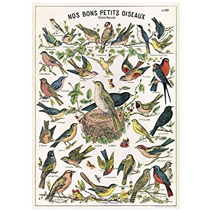 Decorative Bird Poster