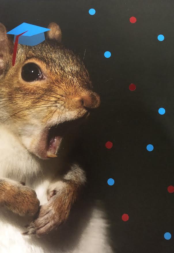Squirrel Graduation Greeting Card