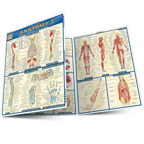 QuickStudy | Anatomy 2 Laminated Study Guide