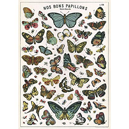 Decorative Butterfly Poster