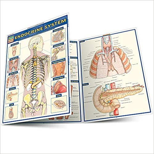 QuickStudy Endocrine System Laminated Study Guide