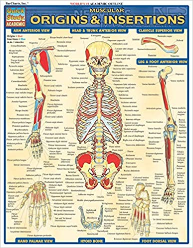 QuickStudy Muscular Origins & Insertions Laminated Study Guide