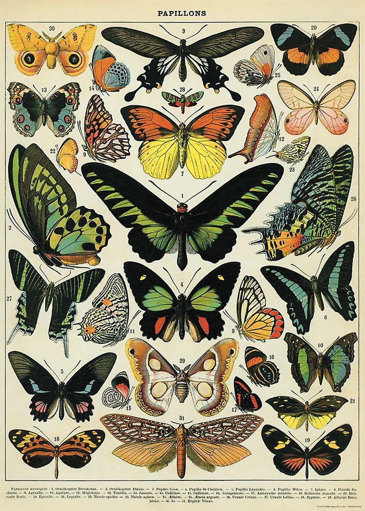 Decorative Papillons Poster