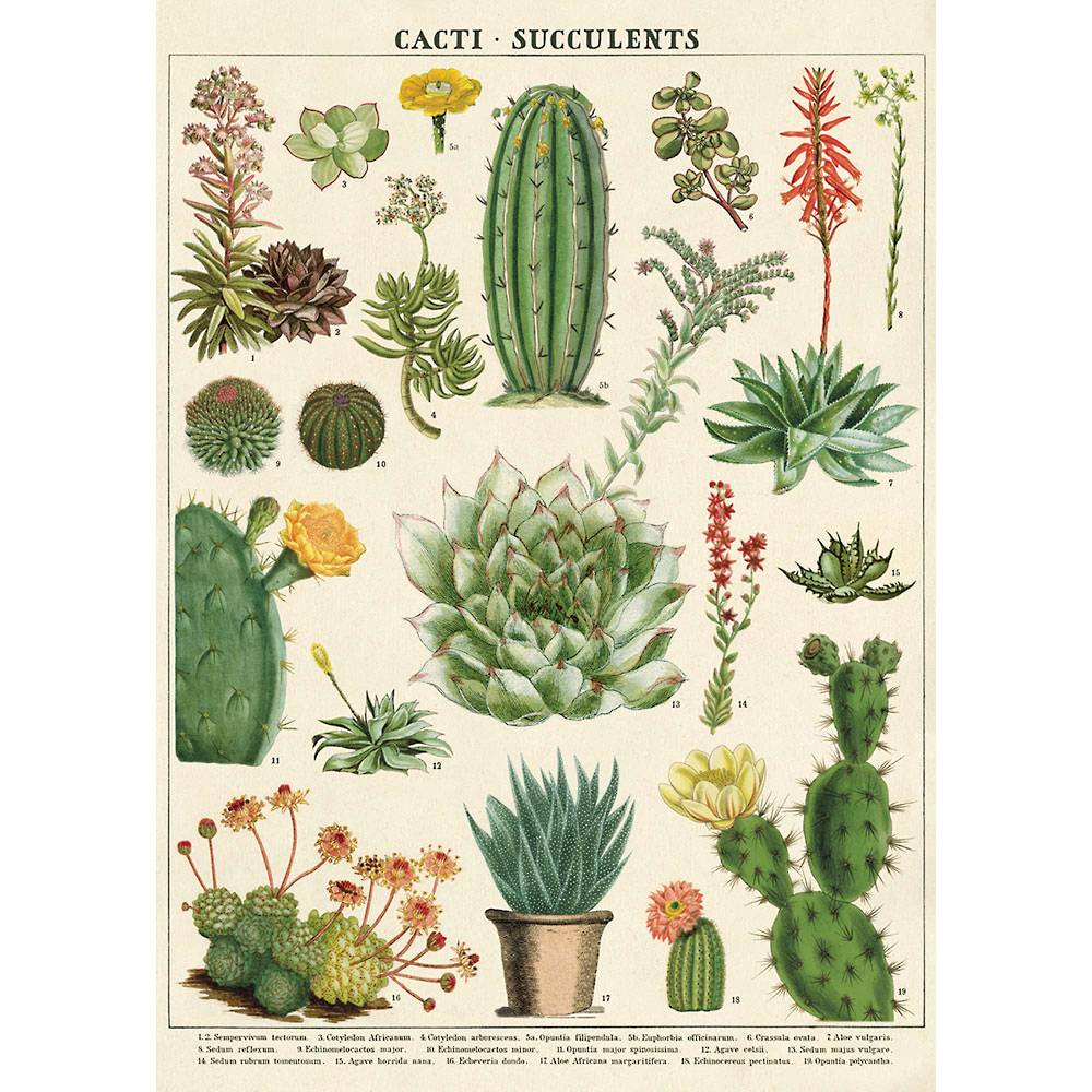 Decorative Succulents Poster